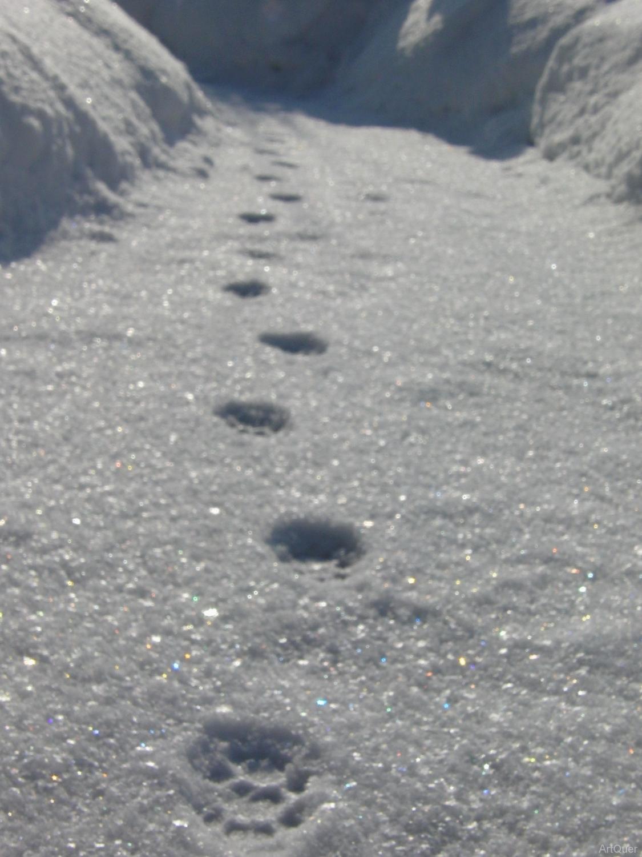 201001-Winterspaziergang